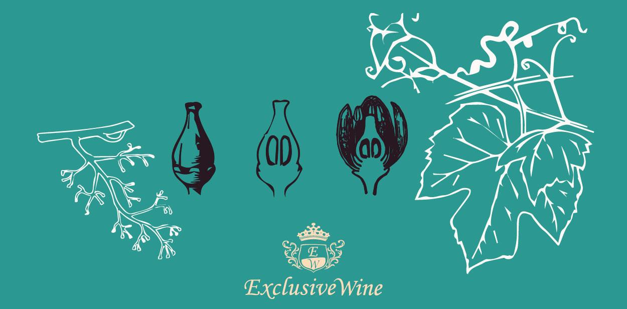 Biologischer Lebenszyklus der Weinrebe - Exclusive Wine