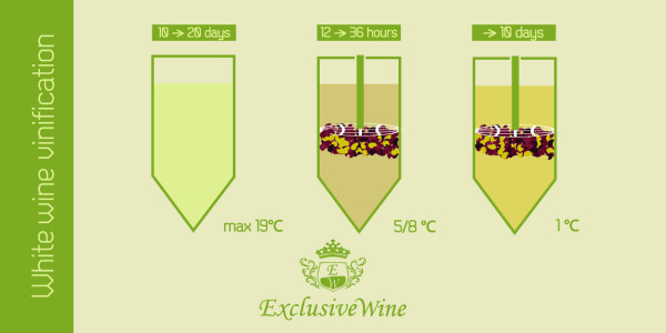 White wine vinification
