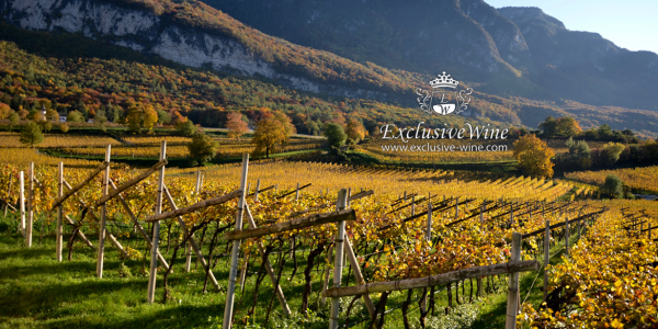 tempo-di-vendemmia-autunno-vinificazione-raccolta-uve-alto-adige-excluisve-wine-cerca-vini-cantine