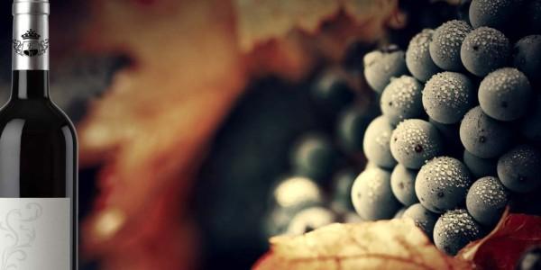 exclusiwe-wine-1680x616