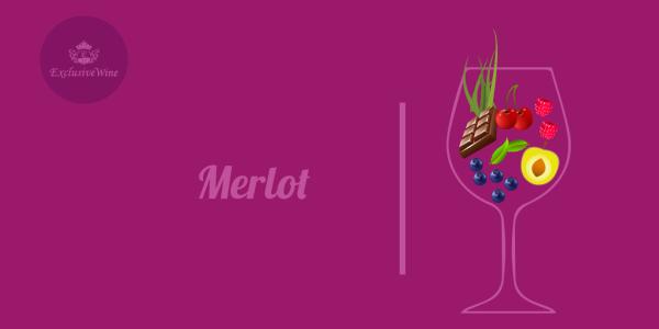 merlot-aromi-vini-aroma-vino-vitigni-internazionali-profumi-sensazioni-spezie-frutti-degustazione-exclusive-wine-1250x616