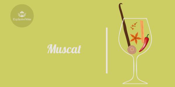 muscat-aromi-vini-aroma-vino-vitigni-internazionali-profumi-sensazioni-spezie-frutti-degustazione-exclusive-wine-1250x616
