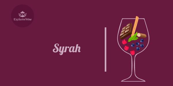 syrah-aromi-vini-aroma-vino-vitigni-internazionali-profumi-sensazioni-spezie-frutti-degustazione-exclusive-wine-1250x616