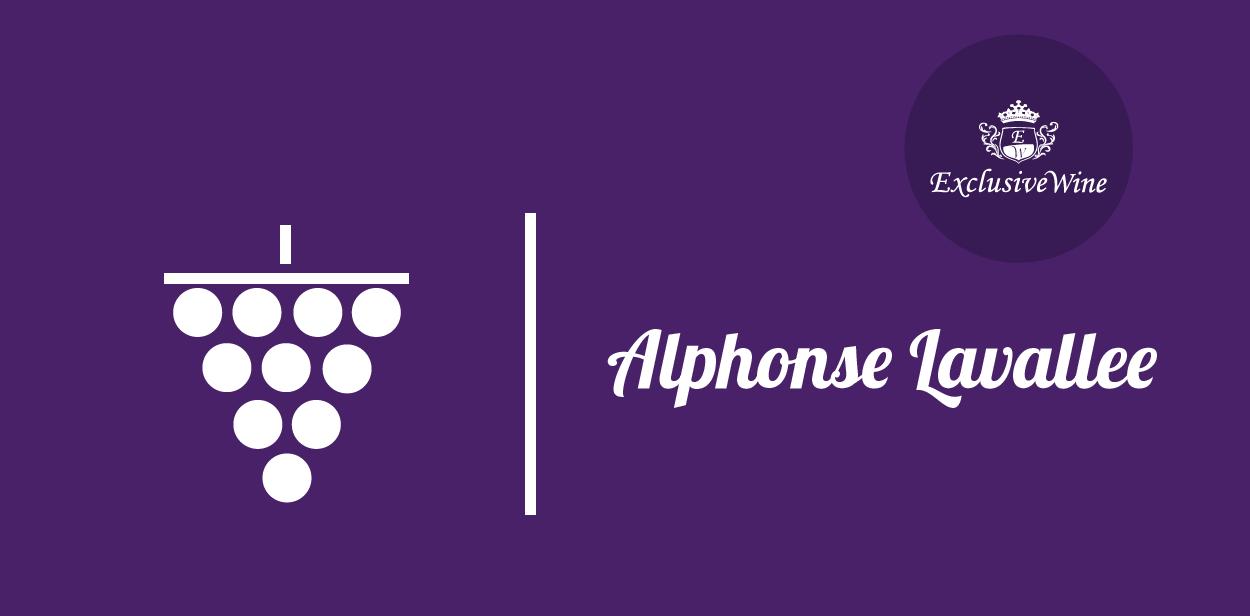 uva-alphonse-lavallee-riber-tipologie-uve-caratteristiche-grappolo-vitigno-portale-ricerca-cantine-vini-enoteche-exclusive-wine-1250x616