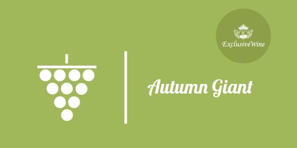 uva-autumn-giant-tipologie-uve-caratteristiche-grappolo-vitigno-portale-ricerca-cantine-vini-enoteche-exclusive-wine-1250x616