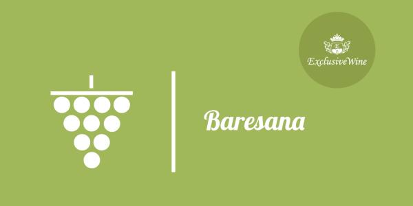 uva-baresana-tipologie-uve-caratteristiche-grappolo-vitigno-portale-ricerca-cantine-vini-enoteche-exclusive-wine-1250x616