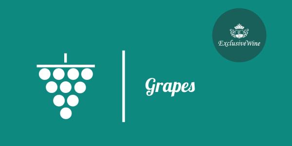uva-caratteristiche-organolettiche-pgrappolo-uve-tipologie-uve-caratteristiche-grappolo-vitigno-portale-ricerca-cantine-vini-enoteche-exclusive-wine-1250x616