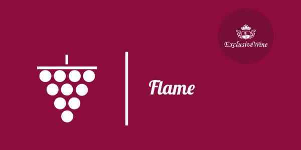uva-flame-tipologie-uve-caratteristiche-grappolo-vitigno-portale-ricerca-cantine-vini-enoteche-exclusive-wine-1250x616