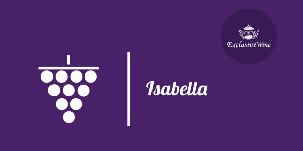uva-isabella-tipologie-uve-caratteristiche-grappolo-vitigno-portale-ricerca-cantine-vini-enoteche-exclusive-wine-1250x616