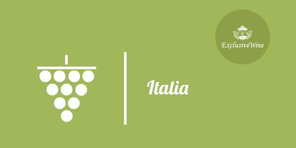 uva-italia-tipologie-uve-caratteristiche-grappolo-vitigno-portale-ricerca-cantine-vini-enoteche-exclusive-wine-1250x616