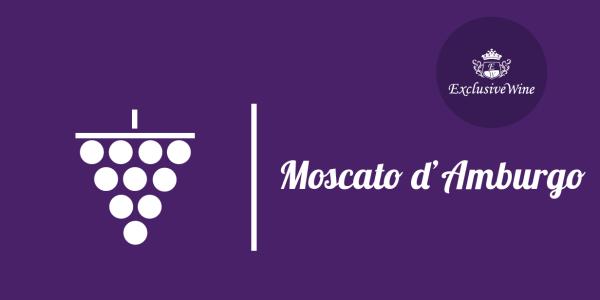 uva-moscato-amburgo-tipologie-uve-caratteristiche-grappolo-vitigno-portale-ricerca-cantine-vini-enoteche-exclusive-wine-1250x616
