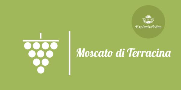 uva-moscato-di-terracina-tipologie-uve-caratteristiche-grappolo-vitigno-portale-ricerca-cantine-vini-enoteche-exclusive-wine-1250x616