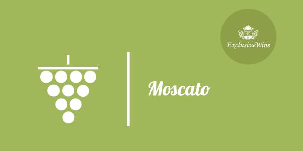 uva-moscato-tipologie-uve-caratteristiche-grappolo-vitigno-portale-ricerca-cantine-vini-enoteche-exclusive-wine-1250x616
