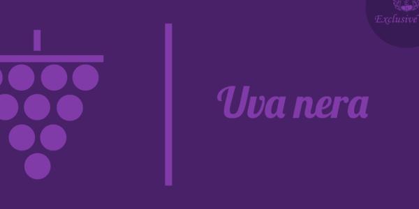uva-nera-tipologie-caratteristiche-uva-da-tavola-uva-da-vino-glossario-exclusive-wine-1680x616