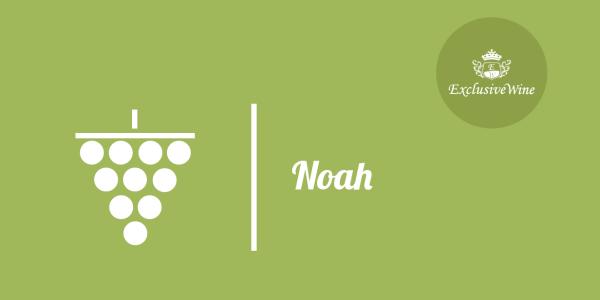 uva-noah-tipologie-uve-caratteristiche-grappolo-vitigno-portale-ricerca-cantine-vini-enoteche-exclusive-wine-1250x616
