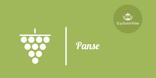 uva-panse-precoce-tipologie-uve-caratteristiche-grappolo-vitigno-portale-ricerca-cantine-vini-enoteche-exclusive-wine-1250x616