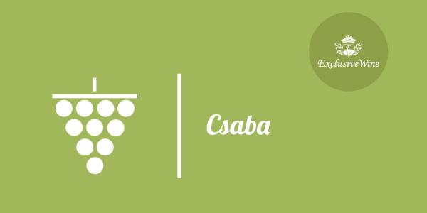 uva-perle-di-csaba-tipologie-uve-caratteristiche-grappolo-vitigno-portale-ricerca-cantine-vini-enoteche-exclusive-wine-1250x616