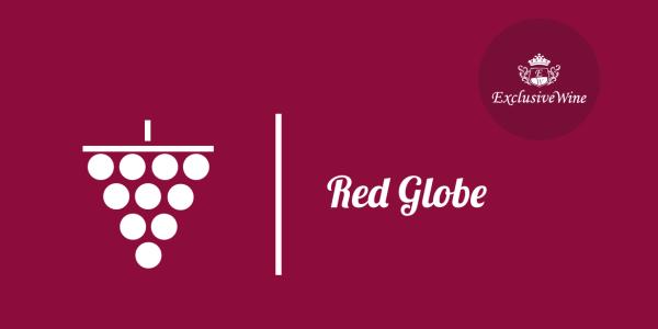 uva-red-globe-tipologie-uve-caratteristiche-grappolo-vitigno-portale-ricerca-cantine-vini-enoteche-exclusive-wine-1250x616