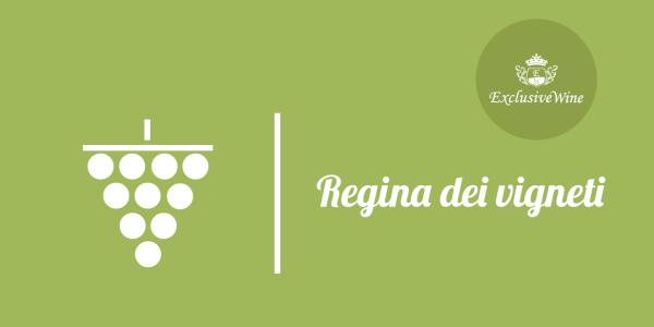 uva-regina-dei-vigneti-tipologie-uve-caratteristiche-grappolo-vitigno-portale-ricerca-cantine-vini-enoteche-exclusive-wine-1250x616
